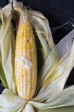 Man schälte gelben Mais auf dunklem Hintergrundvertikalenplan Stockfotografie