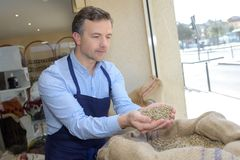 Man scooping dried beans in hands. Dried royalty free stock photo