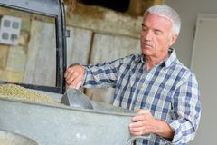 Man scooping dry goods. Man royalty free stock images