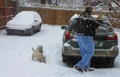 Man scraping ice from car with two Westie dogs looking on in heavy snow royalty free stock images
