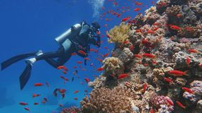 Man scuba diver admiring beautiful colorful tropical coral reef. Man scuba diver admiring beautiful colorful coral reef stock photography