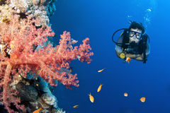 Man scuba diver with fish and coral Royalty Free Stock Photos