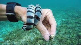 Man scuba diver in tropical sea stock footage