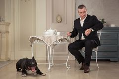 Man seatting at the table and looking at the watch. Near leas a dog pit bull or black Staffordshire Terrier in vintage interior Royalty Free Stock Photo