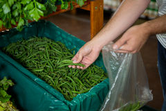Man selecting green beans in organic section Stock Photography