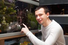 Man selecting tropical fish. Portrait of young man sitting near the aquarium in petshop royalty free stock photo