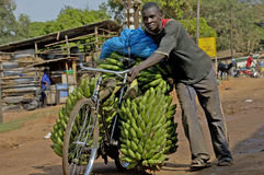 Man selling bananas on his bike. Kampala, Uganda-12 April 2017. The way people life in Uganda. Man selling bananas on his bike Stock Image