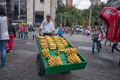 Man selling bananas in Medellin Colombia. September 26, 2017 Medellin, Colombia: a mobile vendor selling bananas from a wheeled wooden cart in the center of the Stock Photos