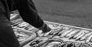 A man selling his fishes at a market Royalty Free Stock Photography