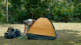 Man sets tent in the forest. Adult man sets an orange tent in the tropical rain forest. Camping tent in the jungle stock footage