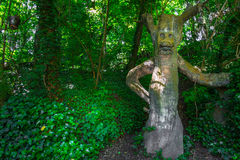 Man Shape av trädet i skog Arkivbilder