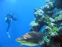 Man&Shark. Diver with camera with shark in reef Royalty Free Stock Photography