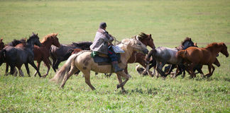 Man shepherd. On horseback tending a herd of horses Stock Photography