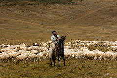 Man shepherd on horseback tending a herd of ships Royalty Free Stock Images