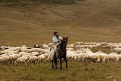 Man shepherd on horseback tending a herd of ships Royalty Free Stock Images