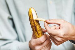 Man in shirt clean banana. Male hand in a shirt holding a ripe banana and clean it royalty free stock image
