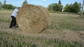 Man shirt move push straw bales agricultural field stock video