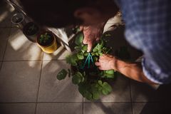 A man in a shirt rakes the earth in a pot where lettuce grows at home on the balcony. He rests after a hard day`s work royalty free stock photography