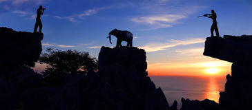 Man shooting an elephant on the mountain. Stock Photo