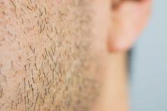 Man short beard Stock Image