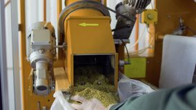 Man shovel herbal tea from machine into bag, tea factory. Man shovel herbal tea from machine into bag. The worker controls process of making herbal tea. Modern stock video footage