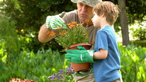 Man showing potted plant to grandson stock footage