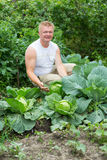 Man shows the cabbage harvest. Royalty Free Stock Photos