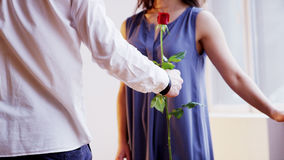 A Man Shows a Red Rose to a Woman. A Man Gives a Flower. Close-up. Shot on RED Epic Royalty Free Stock Photography