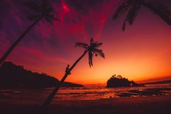 Man sit on coconut palm and bright sunset or sunrise at tropical beach with ocean. Man sit on coconut palm and bright sunset or sunrise at tropical beach with stock images
