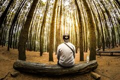 Man Siting on Log in Center of Forest Panoramic Photo Stock Photo