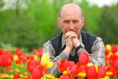 Man sits on tulips field Stock Photos