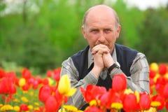Man sits on tulips field Stock Photos