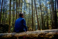 A man sitting alone in the forest. stock photo