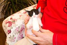Feeding the baby cat with a milk replacer. A man sitting on an armchair is feeding a kitten with a milk replacer Royalty Free Stock Photos