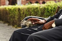 Man sitting on a bench with a squirrel, Agra, Uttar Pradesh, India Royalty Free Stock Images