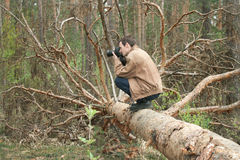A man sitting on a fallen tree Royalty Free Stock Photography