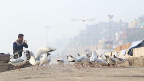 Man sitting on ghats of Ganges river while seagulls surround him. VARANASI, INDIA - 25 FEBRUARY 2015: Man sitting on ghats of Ganges river while seagulls stock footage