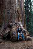 Man sitting on a sequoia. Young man sitting on the base of a giant sequoia tree in California Royalty Free Stock Photo