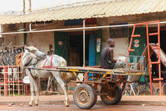 A man sitting on a truck with a white horse in a street of Tambacounda Stock Photography
