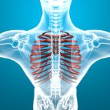 Man skeleton ribcage pain breathing Royalty Free Stock Photos