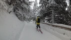 Man Skiing Down a Forest Road. Snowfall In a Pine Forest stock video footage