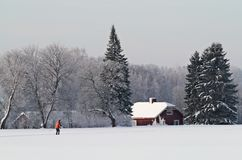 Man skiing in a field near a farm Royalty Free Stock Photography