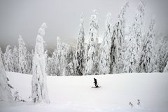 Free Man Skiing On Slope - Winter Holidays Royalty Free Stock Images - 161748409