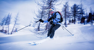 Man skiing in powder snow in a snowy woods. Royalty Free Stock Photo