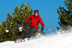 Man skiing between trees. Man is skiing between fir trees Stock Images