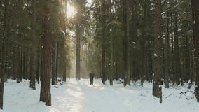 Man skiing in the winter forest stock video footage