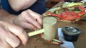 Man smashing crab legs with hammer stock footage