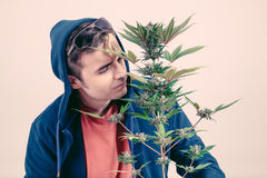 Man smelling Cannabis plant Royalty Free Stock Photo