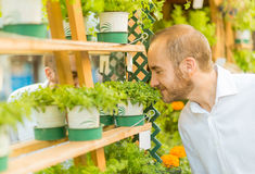 Man smelling herbs in a shop Royalty Free Stock Image