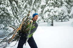 Man with smiling face, drags an armful of firewood. Through the snowy pine forest. Toned image Royalty Free Stock Image